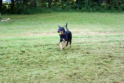 How to Train Your 1-Year-Old Dog