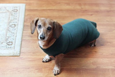 Easy Upcycle: No-Sew Dog Sweatshirt