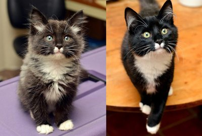 22 Kittens Who Got All Grown Up