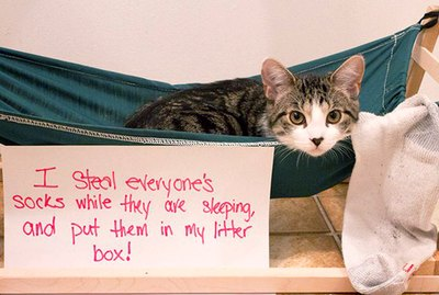 Just 31 of the Best Cat Shaming Pictures on the Internet