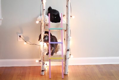 How To Make Adorable Kitty Bunk Beds