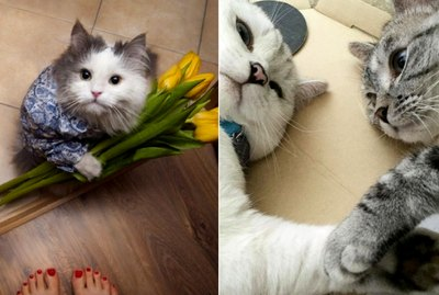 19 Photos That Prove Cats Are Actually Sweethearts