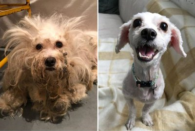 This Wild, Matted Dog Got A Fabulous New Hairdo
