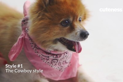 How To Tie A Bandana On A Dog In 4 Adorable Ways
