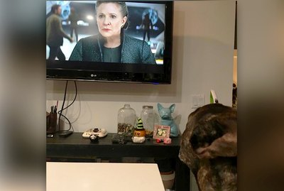 Carrie Fisher's Dog Has Touching Reaction While Watching Mom In New 'Star Wars' Trailer