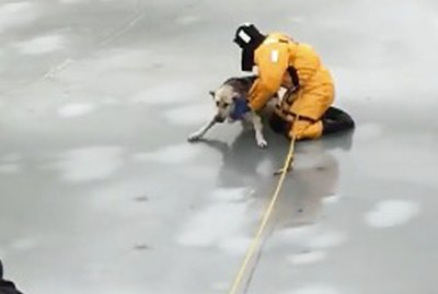 This Footage Of A Dog Being Rescued From A Frozen Creek Will Melt You