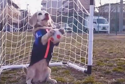 Just 18 Of The Most Unbelievably Athletic Pets We've Ever Seen