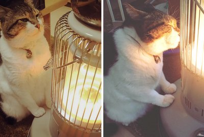 You Will Never Love Anyone Like This Cat Loves His Space Heater