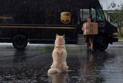 25 Dogs Who Can't Wait To Chew On Your Amazon Prime Deliveries