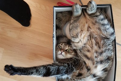 17 Cats Who Are Kinda Maybe Stuck In Boxes