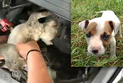 What A Woman Did After She Heard A Puppy Crying Will Melt Your Heart