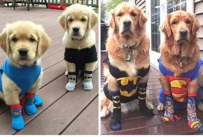 23 Puppies Who Got All Grown Up
