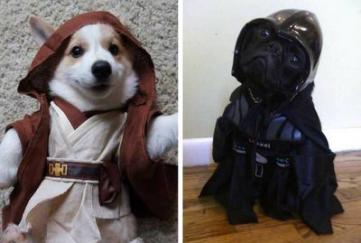 """Dogue One: 12 """"Star Wars"""" Dogs That Are One With The Force"""