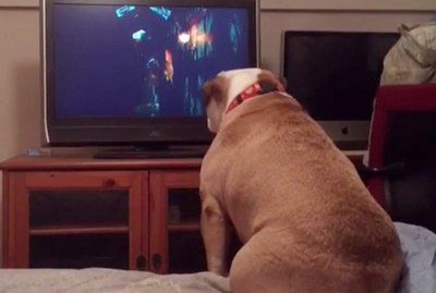 Do Dogs Get Spooked When Watching Scary Movies?