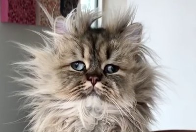 This Disheveled Cat Would Like You To Know He Doesn't Do Mondays