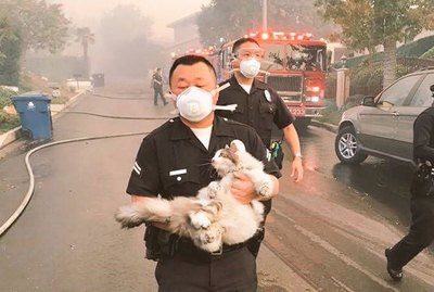 Police Officer Saves Cat From Wildfire, Gives Hope For Humanity