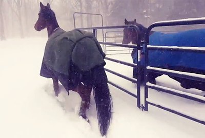Horses Put Snowstorm In The Friend Zone With Synchronized 180°s