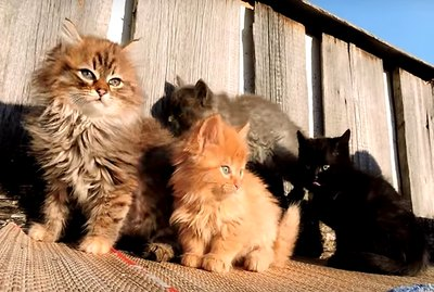 Dozens Of Cats Takeover Farm: I Guess This Is How You Get Cats
