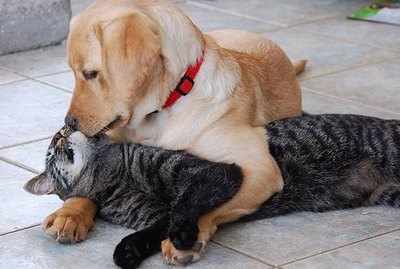 23 Pets Totally Making Out With Each Other