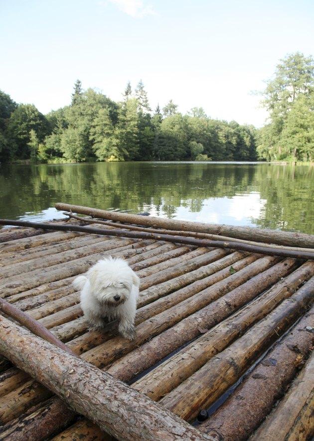 Dog on a raft