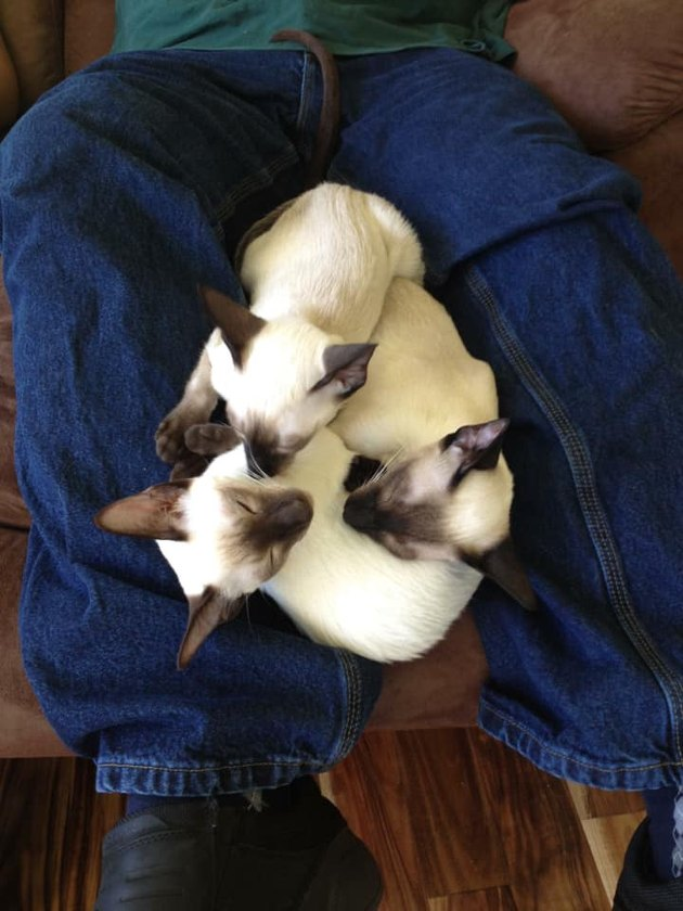 three cats snuggling