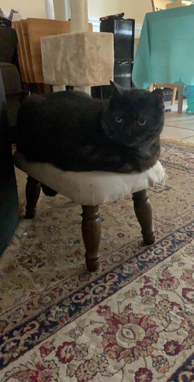 cat sitting on ottoman