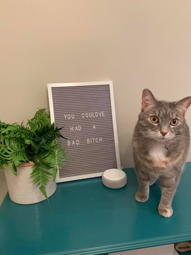 cat poses in front of funny letter board