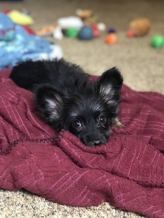 Cute puppy lying on blanket