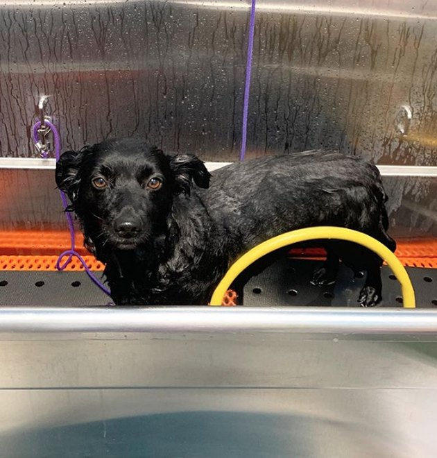 wet black dog in tub