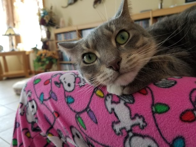 20 cats with beautiful gold star eyes