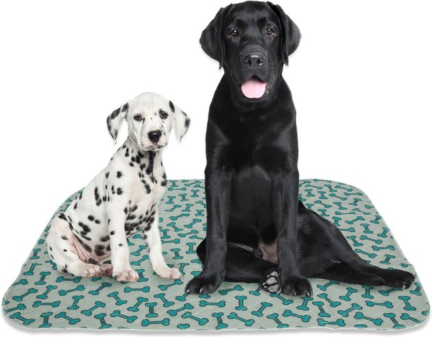 two dogs sitting on puppy pad