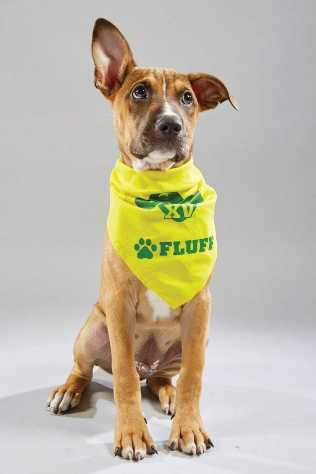 Everything you need to know about Puppy Bowl XV
