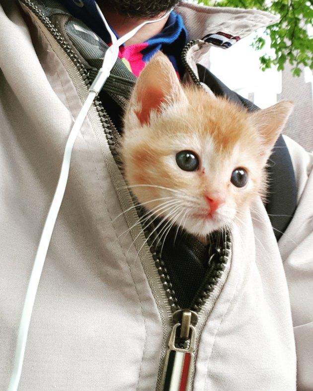 Kitten tucked into front of windbreaker