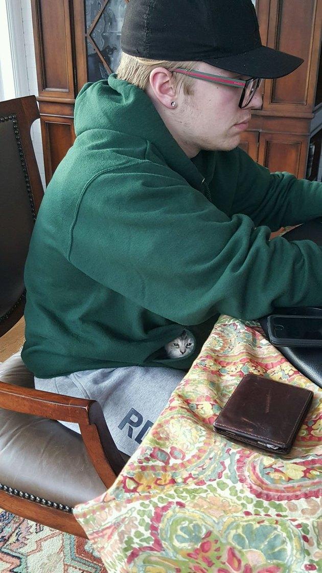 Kitten in sweatshirt pocket