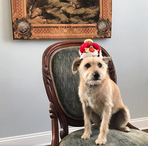 dog wearing crown sitting on chair