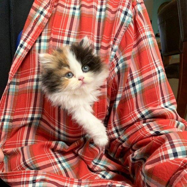 Kitten in plaid shirt pocket