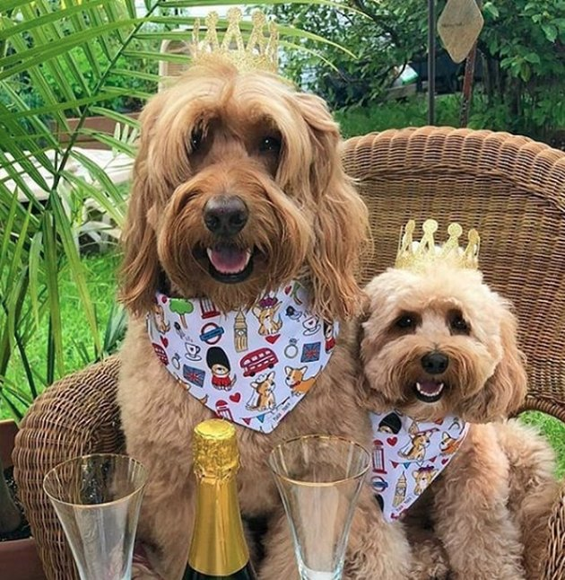 two dogs wearing crowns