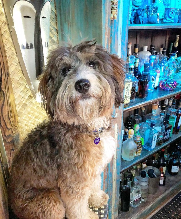 112 alcohol-inspired dog names