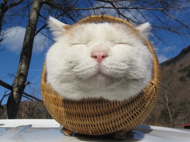 Cat with a peaceful expression sitting in a basket