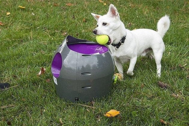 dog chases tennis balls