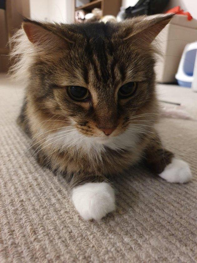 Cat looking contemplative