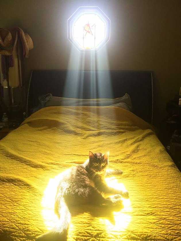 Cat on bed in ray of sunlight
