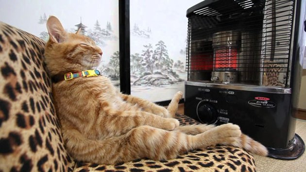 Cat sitting like a human in front of a space heater