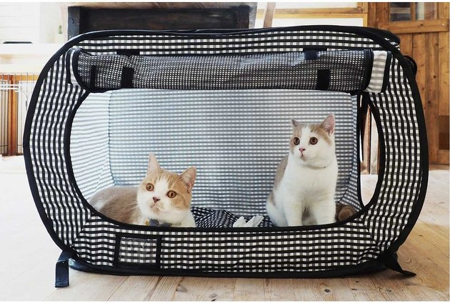 cats in Necoichi Portable Stress Free Cat Cage