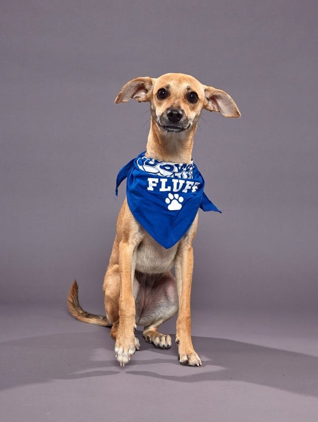 Puppy Bowl XVI participant named Sol
