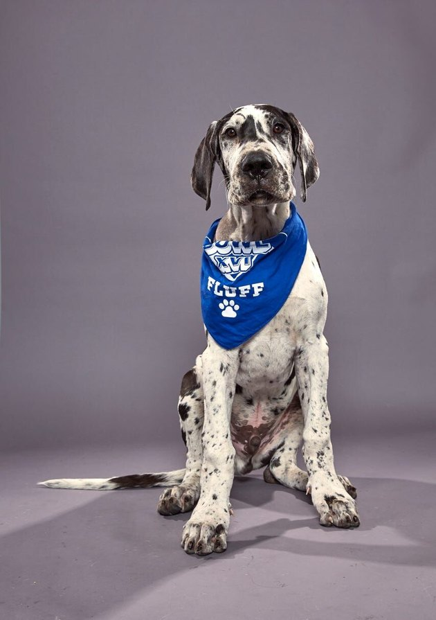 Puppy Bowl XVI participant named Killian