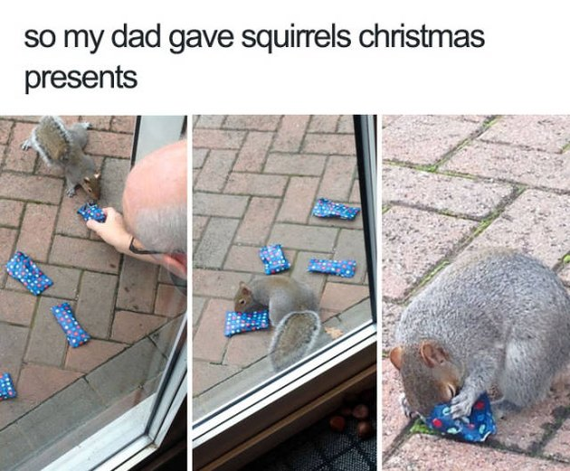 Squirrels unwrapping Christmas presents.