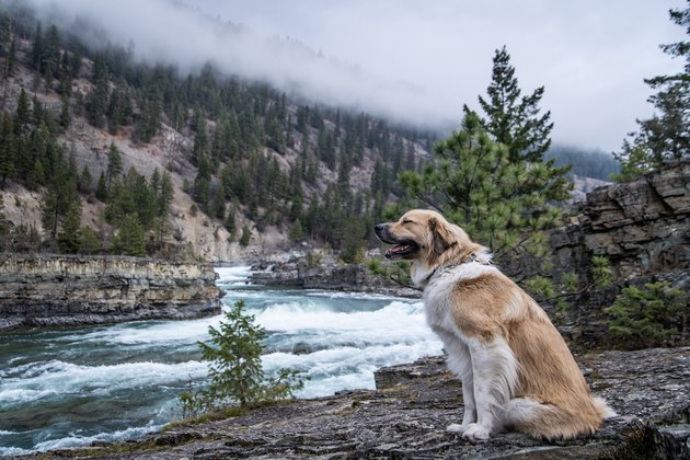 Dog posing next to a river
