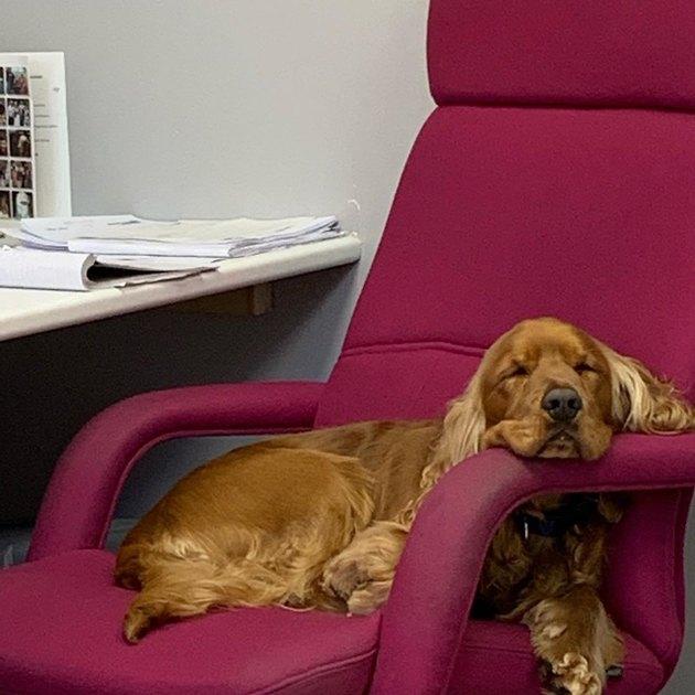 a dog sleeping on an office chair