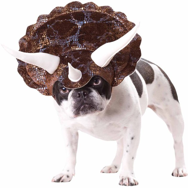 Triceratops Halloween costume for dogs